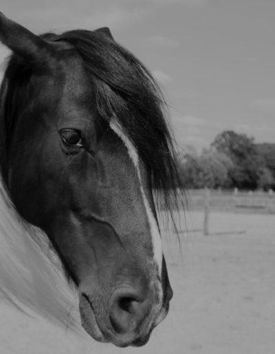 Fotograf-Mareen-Becker-Tiere-Pferd-2