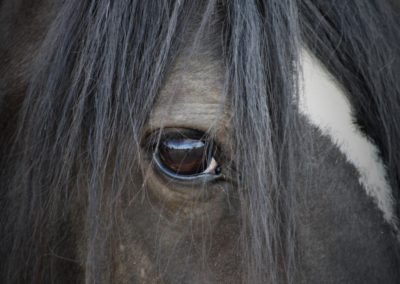 Fotograf-Mareen-Becker-Tiere-Pferd-3
